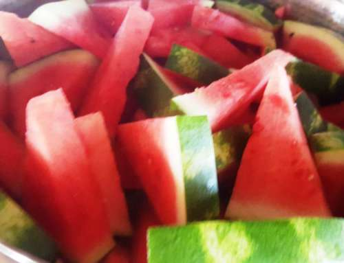 Watermelon feast time!
